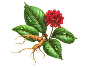 Ginseng - a folk remedy for prostatitis